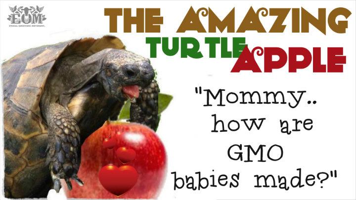 turtle apple web