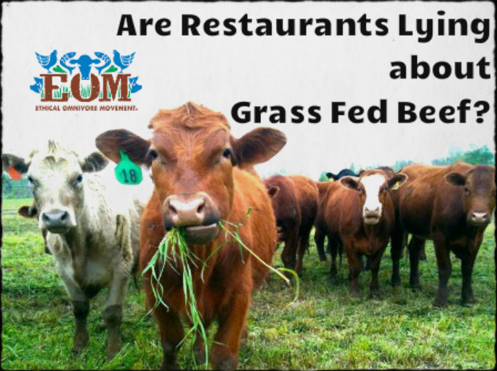 grass fed beef web