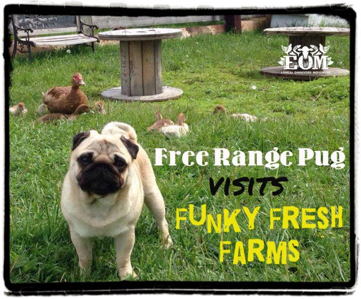Olly funky Fresh Farm