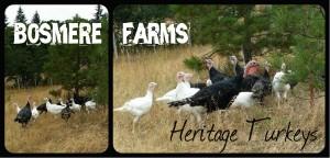 dan farmer
