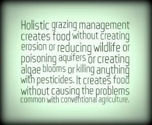 holistic land management