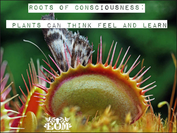 Roots of consciousness