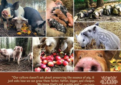 Ethical Omnivore Movement Calendar 2021 - August 2021