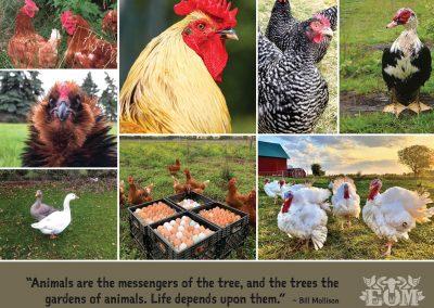 Ethical Omnivore Movement Calendar 2021 - September 2021