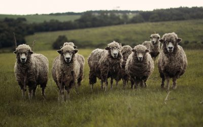 Wool is Ethical: A Tirade